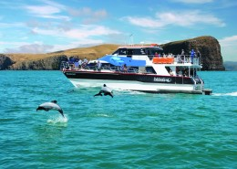 reves-nouvelle-zelande-Akaroa Harbour & wildlife cruise