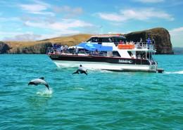 reves-nouvelle-zelande-Akaroa Harbour & wildlife cruise