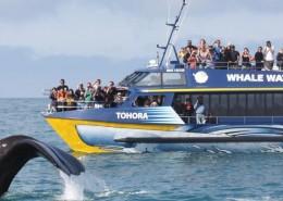 whale-watch-kaikoura-reves-nouvelle-zelande