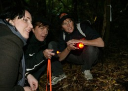 zealandia-by-night-tour-wellington-reves-nouvelle-zelande