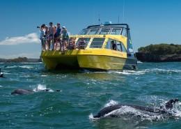 discovery-dolphin-explore-group-paihia-reves-nouvelle-zelande