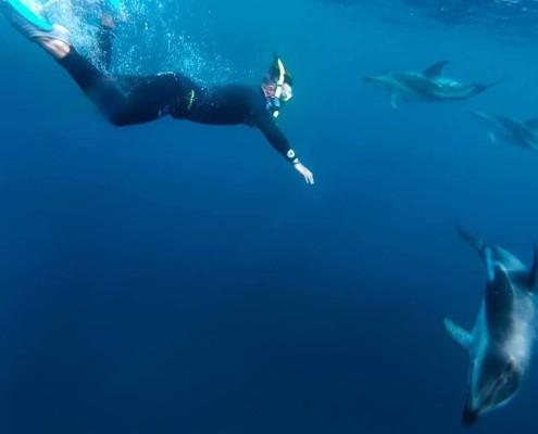 Encounter-Kaikoura-nage-avec-dauphins-reves-nz