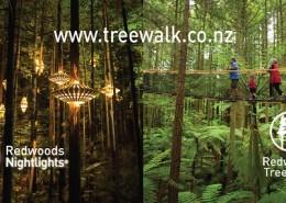 redwoods-treewalk-daytime